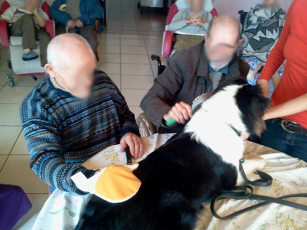 mediation-animale-maureen-education-canine-caen-2