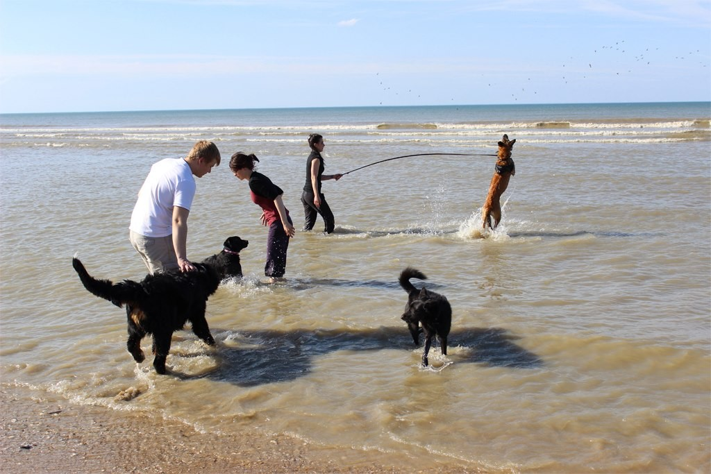 Rando-canine-maureen-education-canine-caen-2