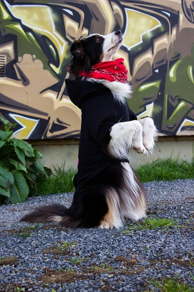 maureen-education-canine-caen-1