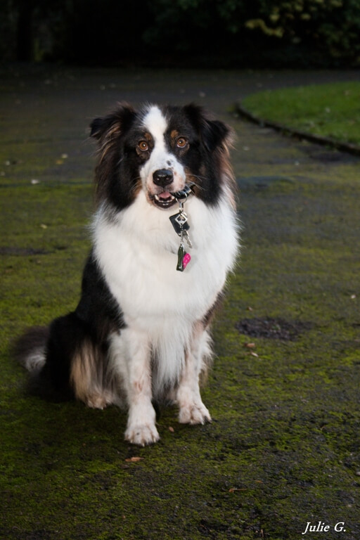 maureen-education-canine-caen-2